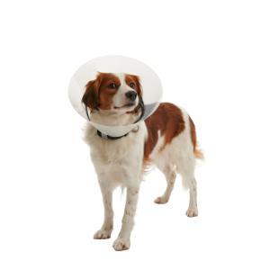 Hundkrage Efter Operation