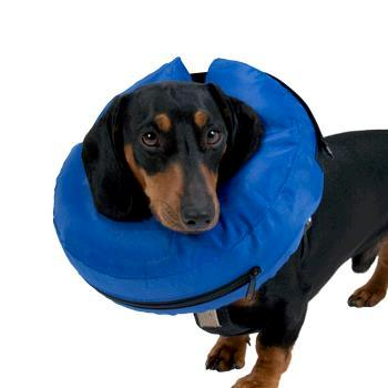 BUSTER Inflatable Collars